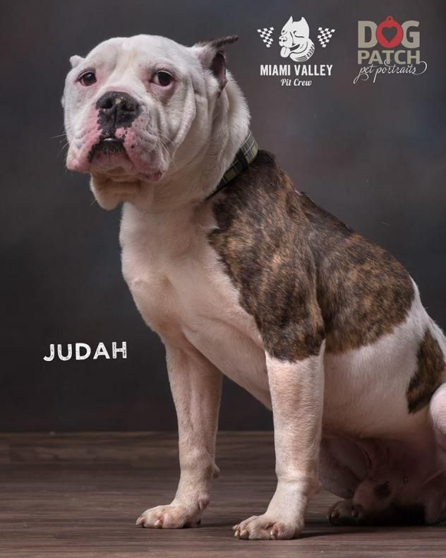 Adopt Judah On Dog Patch Dogs Adult Dogs