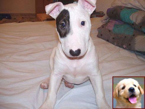 Dog Behavior Spray And Clicker Training Dog To Roll Over