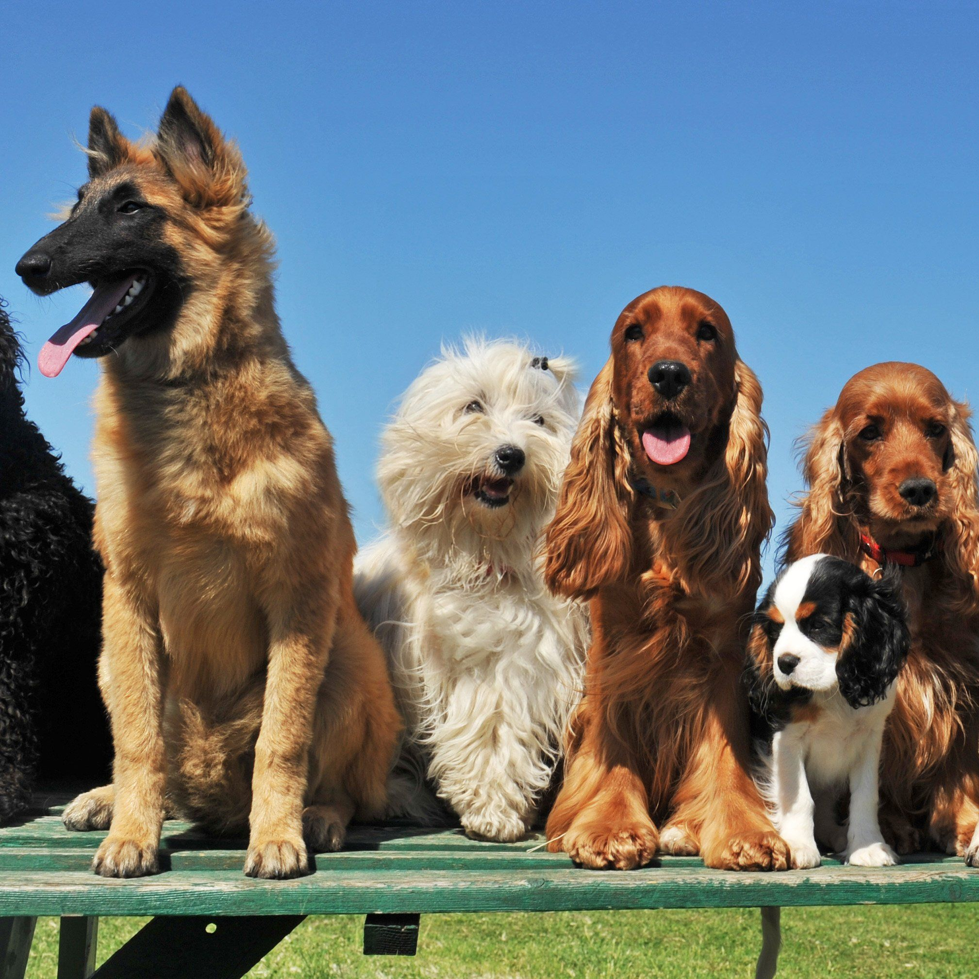 How Many Breeds Of Dogs Are There In The World Dogs Pets Dog