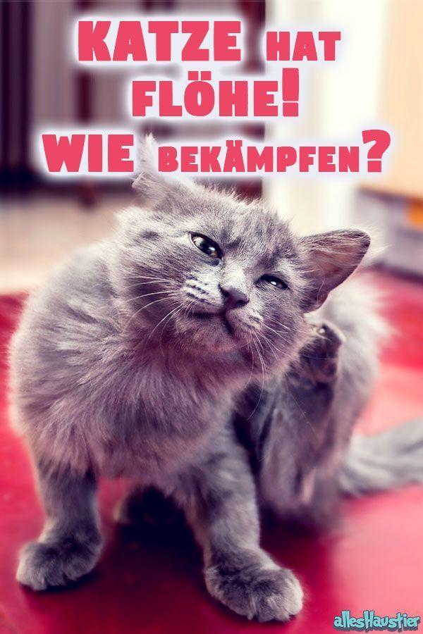 Katzenflohe Flohe Bei Katzen Und In Der Wohnung Bekampfen