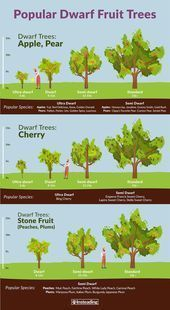Popular dwarf fruit trees to Grow - With views of small gardens and Terraces,... -  Popular dwarf fruit trees to Grow – With views of small gardens and terraces of dwarf trees are evergreen deciduous trees that grow intentionally in a small, manageable size. If you plant dwarf fruit trees, you can harvest an edible, native, hand-picked harvest earlier than with the same fruit species in a larger size. #dwar… #Popular  Source by dianajohnson0656  -