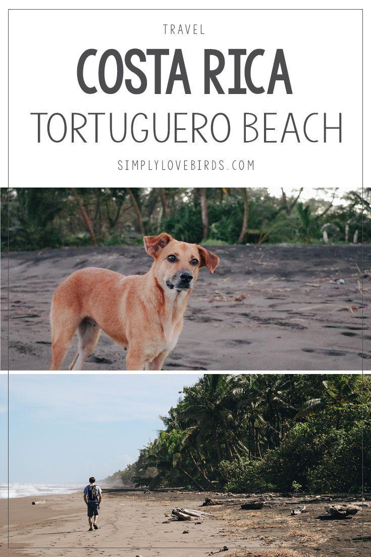 A Travel Guide to Tortuguero Beach: Jungle Paradise in Costa Rica. Read more on simplylovebirds.com.