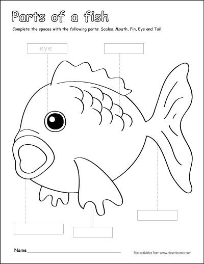 Parts Of A Fish Preschool Colouring Activity Http Cleverlearner