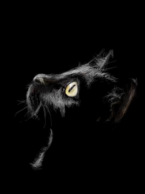 Анимация картинки черные кошки