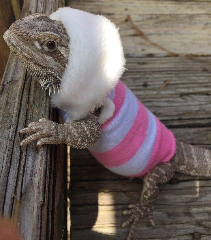 PINKWHITE PASTEL DESIGN XLRG FUR HOODIE SLEEVELESS SHIRT 4 FEMALE BEARDED DRAGON  | eBay