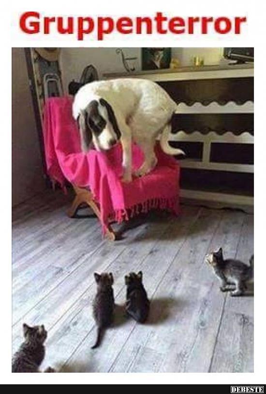 Besten Bilder, Videos und Sprüche und es kommen täglich neue lustige Facebook ... - Funny pets -