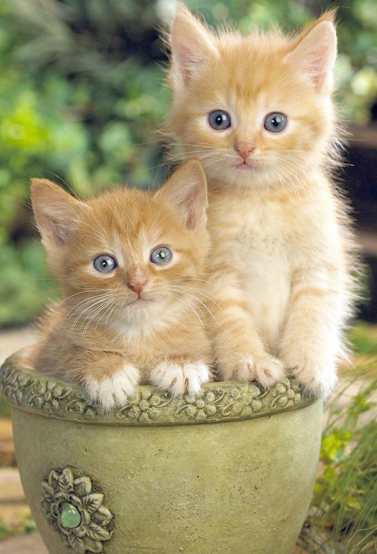 Cute Kittens For Sale Cheap Cute Cats Breeds Kittens Cutest Cute Cats Cats