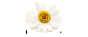AVEENO®ACTIVE NATURALS® Ingredients | AVEENO®