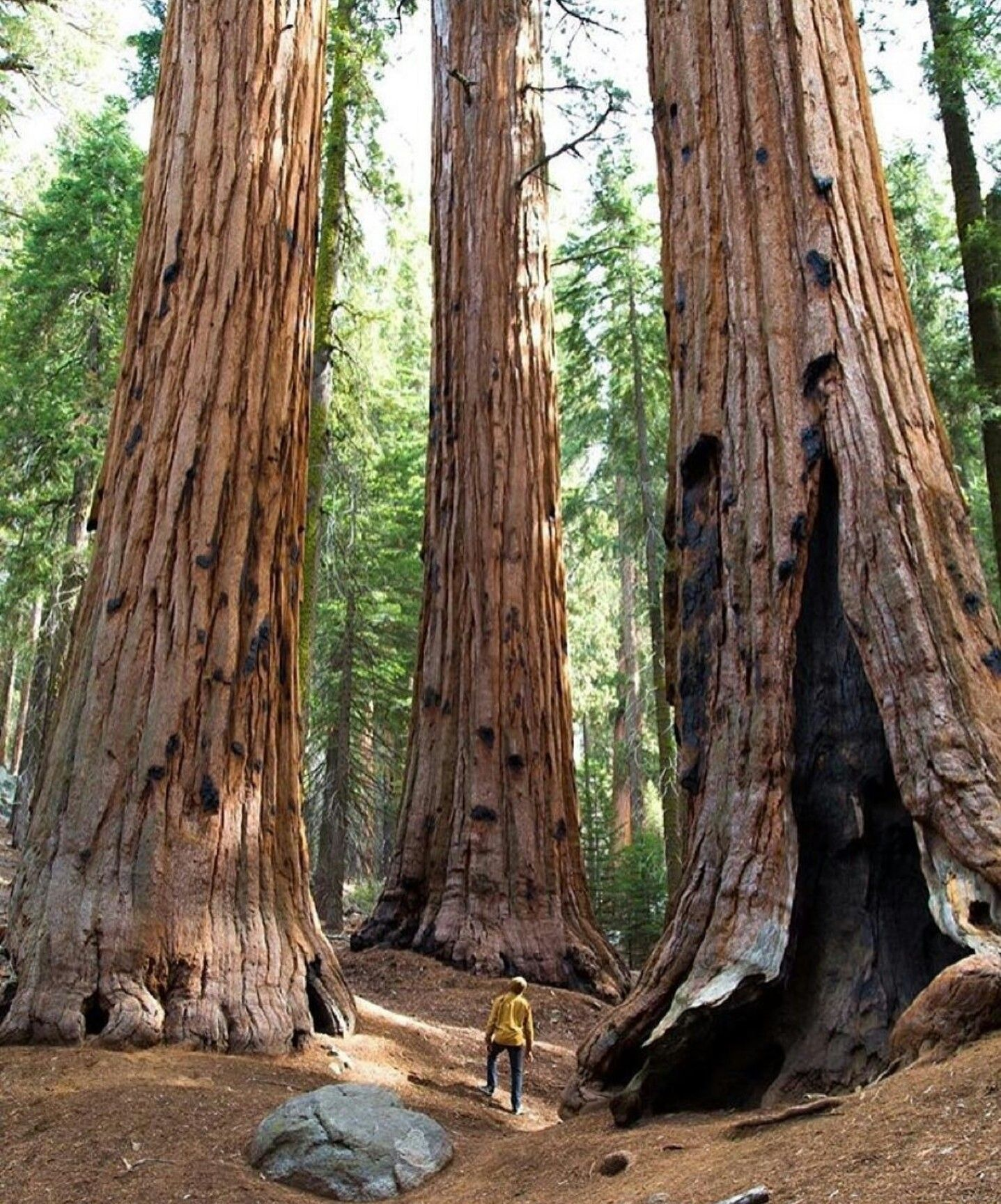 Pin by Chris Roberts on Into the woods Sequoia national