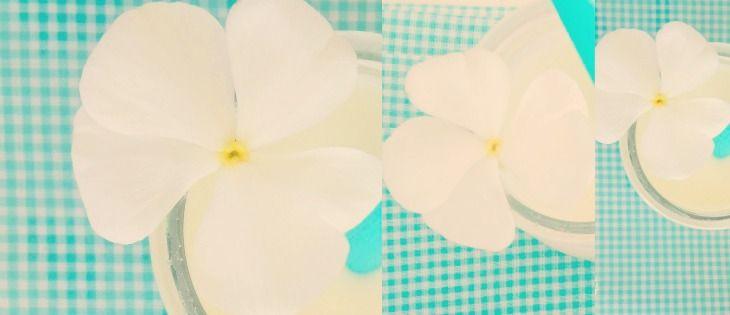 lacasasullaScogliera : Leggera come una farfalla [Enjoy your breakfast]