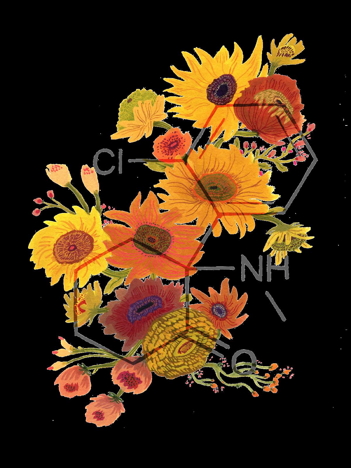 sunflowers | illustration - plant still life flowers | Pinterest ...