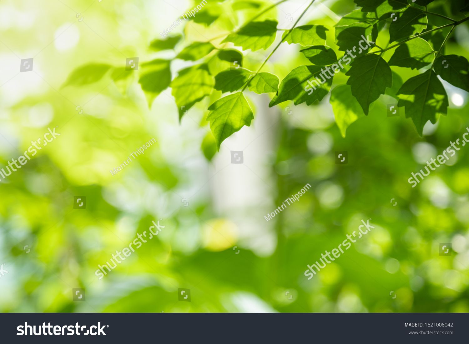 Close Up Of Nature View Green Leaf On Blurred Greenery Background Under Sunlight With Bokeh And Copy Space Using As B In 2020 Greenery Background Nature View Landscape