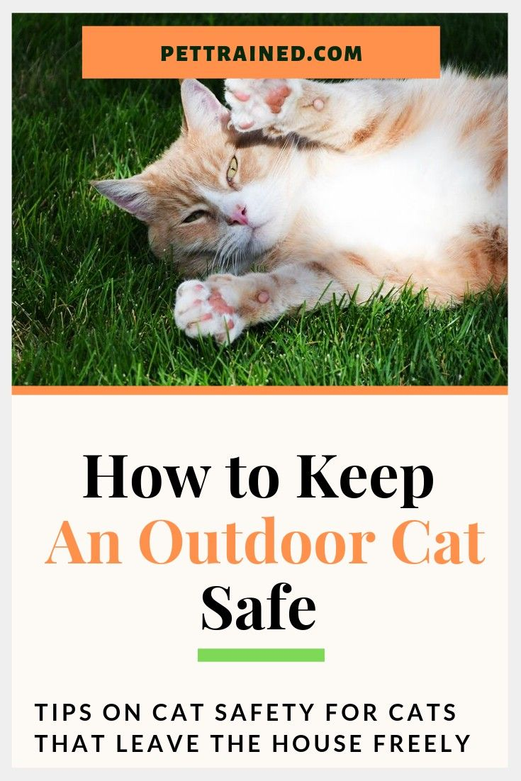 Keeping your cat safe is a serious concern when you allow