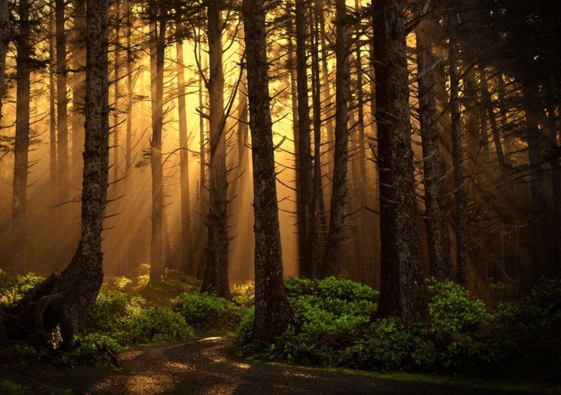 Dusk Rays Photography Dawn Forest Trees Sage Wallpaper Images Tree Photography Wallpaper Dawn And Dusk Tree Photography