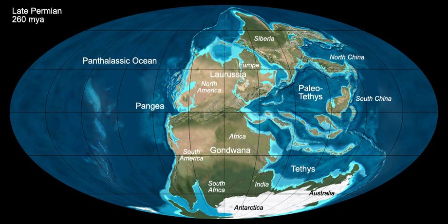 the world before dinosaurs  Google Search  Geology  Pinterest