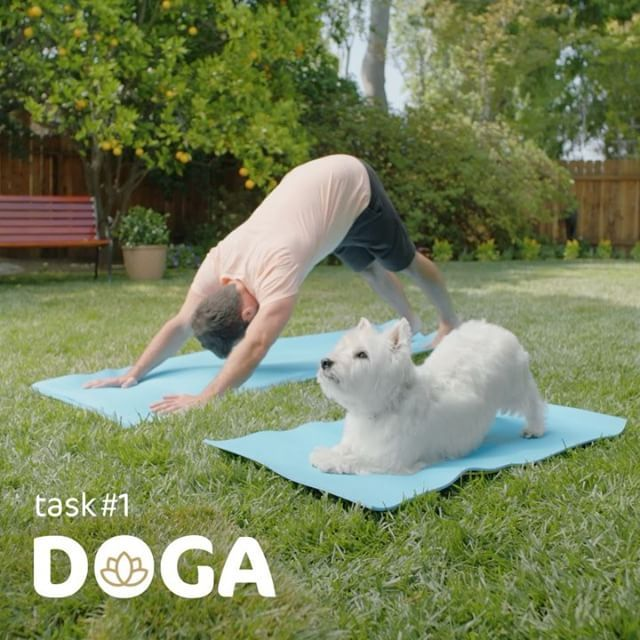 Do some doga. Take a cute picture of you and your dog doing doga together and…