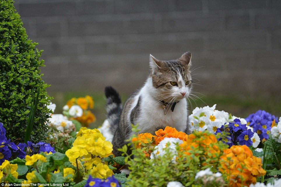 Even The Animals Are Enjoying It Larry Downing Street Cat Enjoys