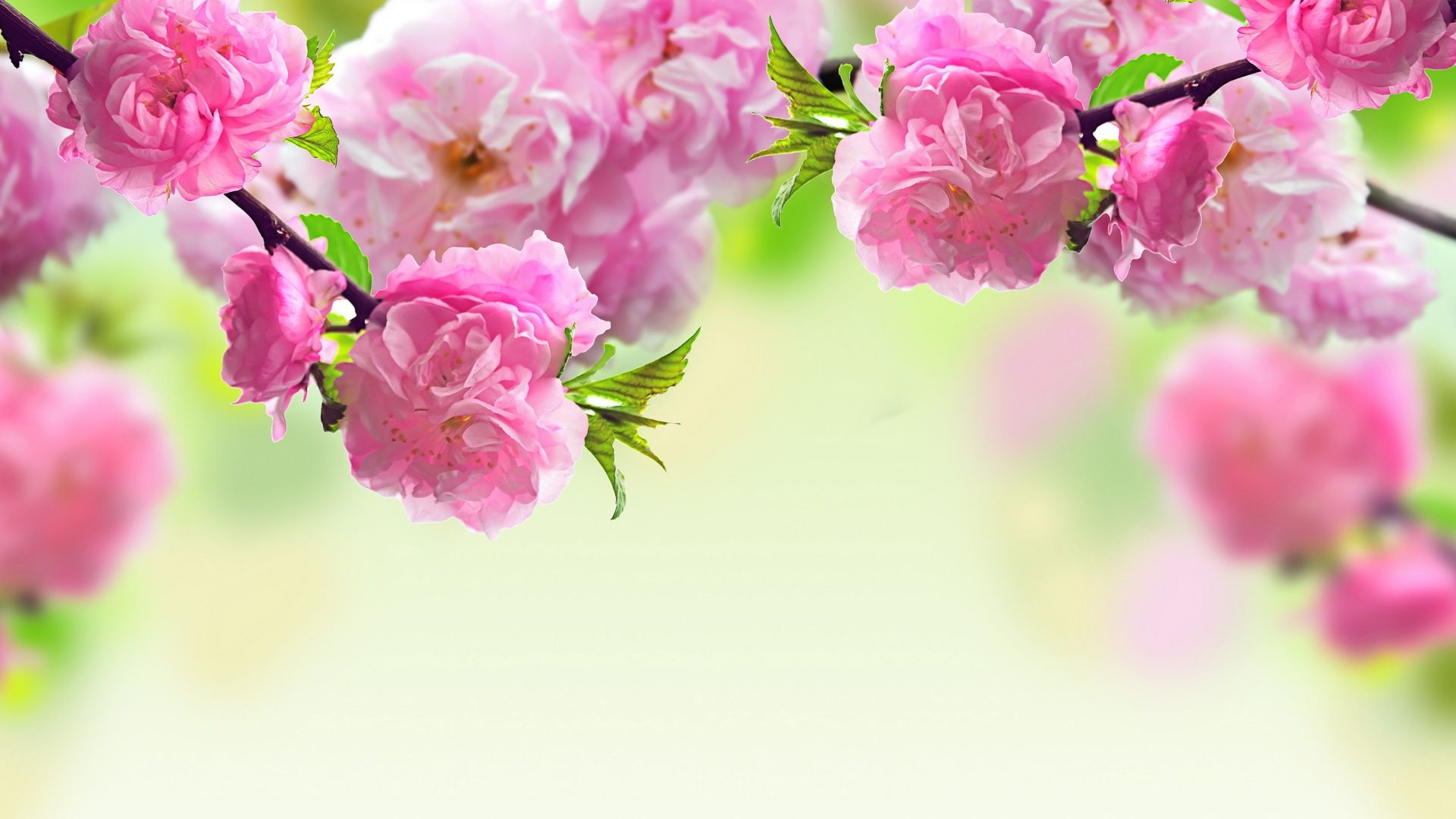 Flower Wallpaper Backgrounds HD Creative Flower Pics Full HD