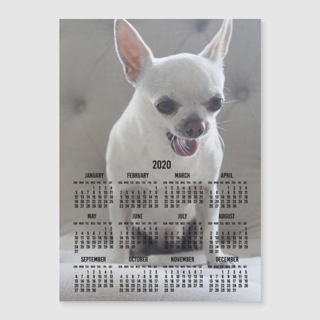 Chihuahua Calendar 2020 Magnetic Photo Card 5x7