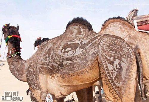 epic-fail-photos-win-camel-haircut-win1.jpg (500×341)