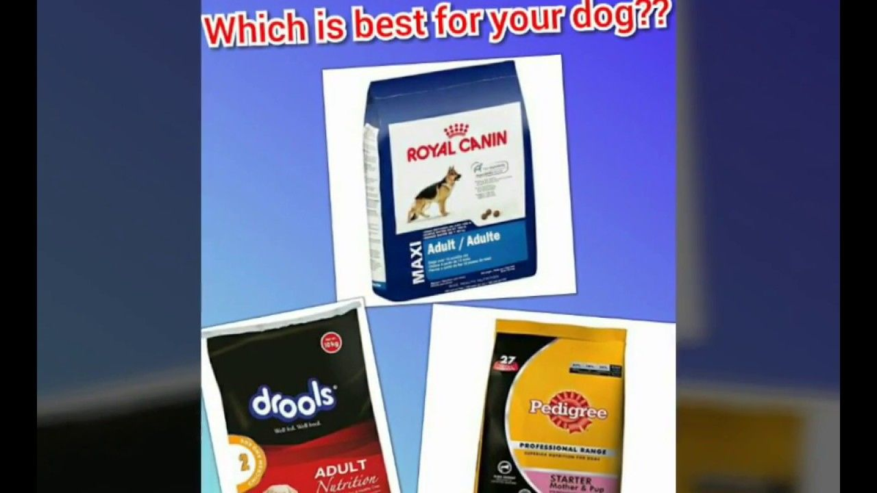Best Dog Feed For Your Dog Pedigree Vs Royal Canin Vs Drools