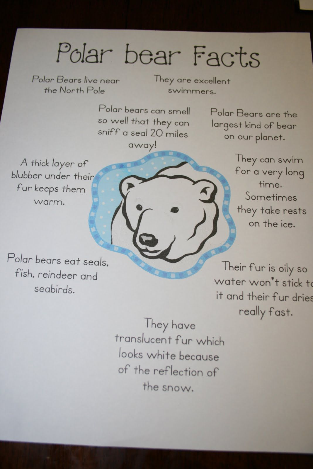 Polar Bear Facts With Images