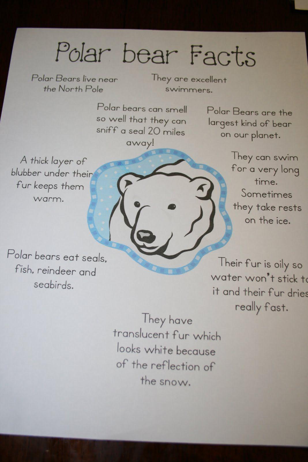Polar Animals and Habitat Research First Grade Polar