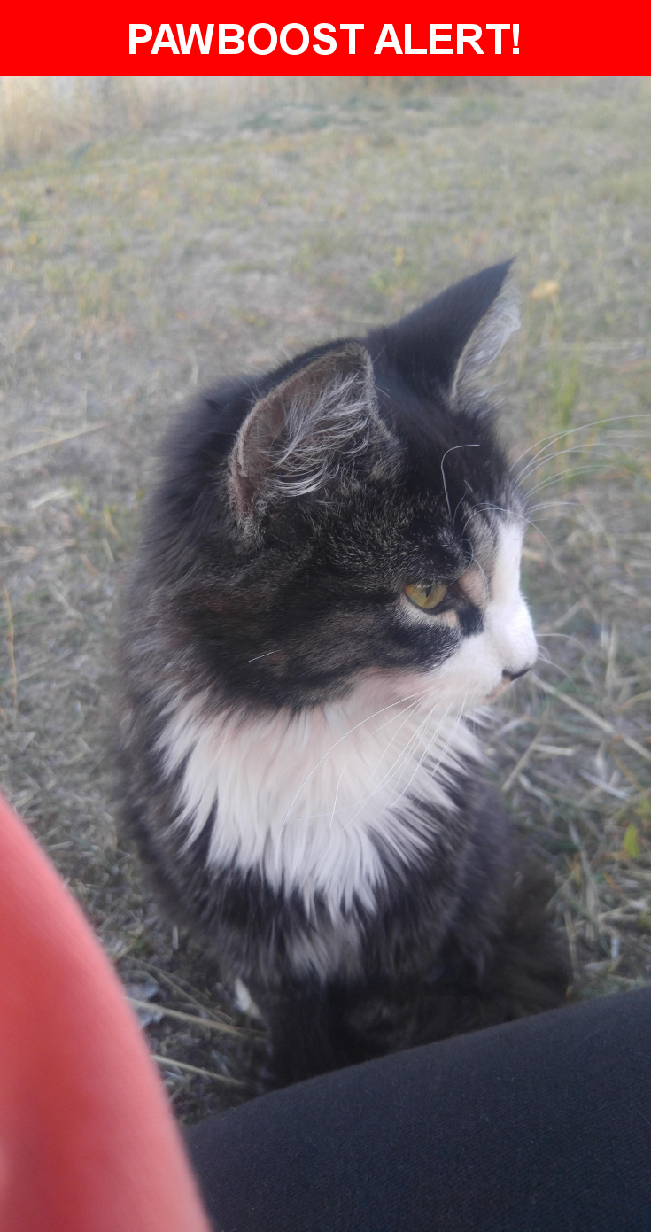 Please spread the word! Takkar was last seen in Spokane, WA 99218.
