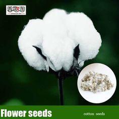 30 unids semillas de algodón, jardín barato semillas de flores