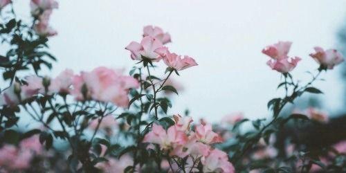 The Girl Flower Header Aesthetic Desktop Wallpaper Twitter Header Pink