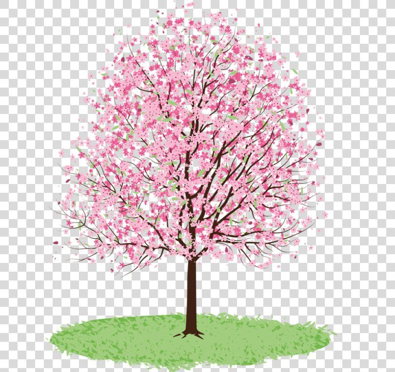Tree Cherry Blossom Spring Clip Art Spring Trees Cliparts Png Tree Apple Blossom Branch Cherry Cherry Blossom Clip Art Spring Tree Cherry Blossom Tree