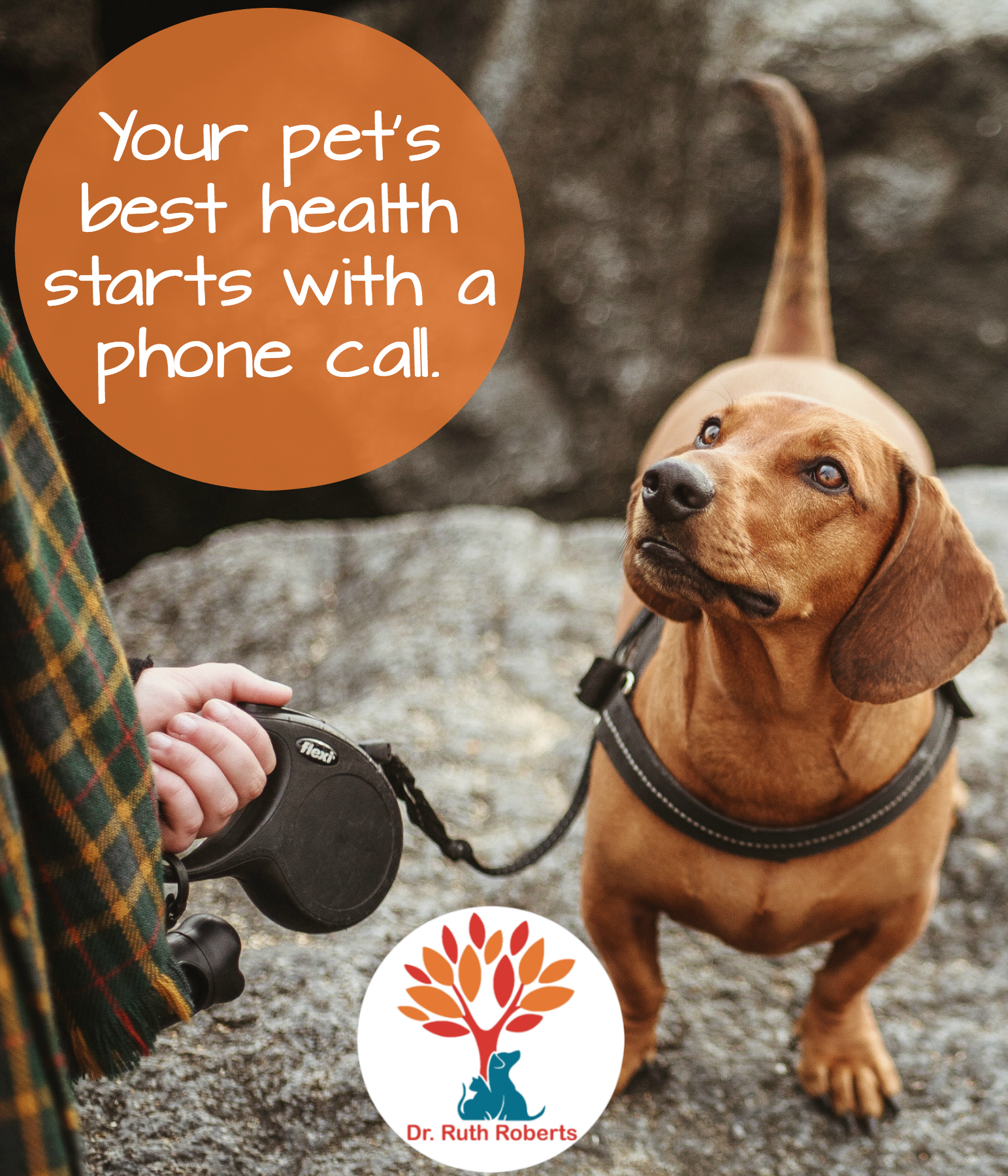 Get a health plan for your pet that helps them heal and