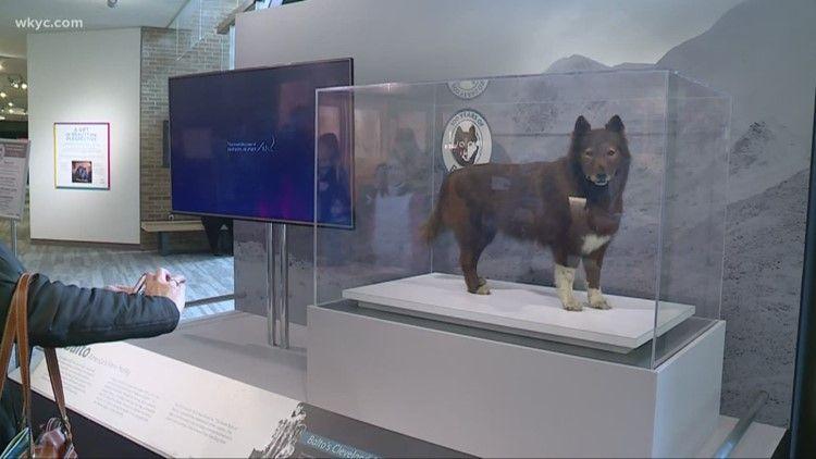 100th Birthday For Dog Balto Who Helped Saved Village Dog Sledding Dog Adoption Dogs
