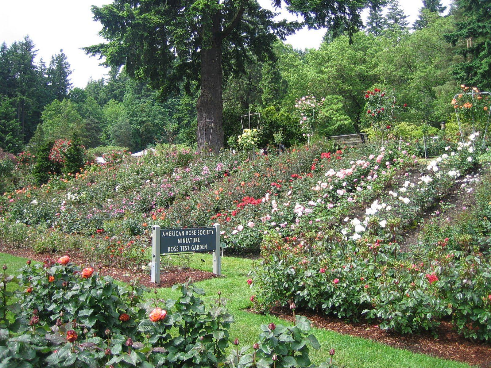 Rose Garden Chandigarh Garden