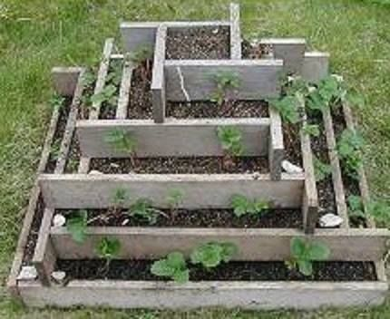 Grow almost 50 strawberry plants in less than a square yard of space.
