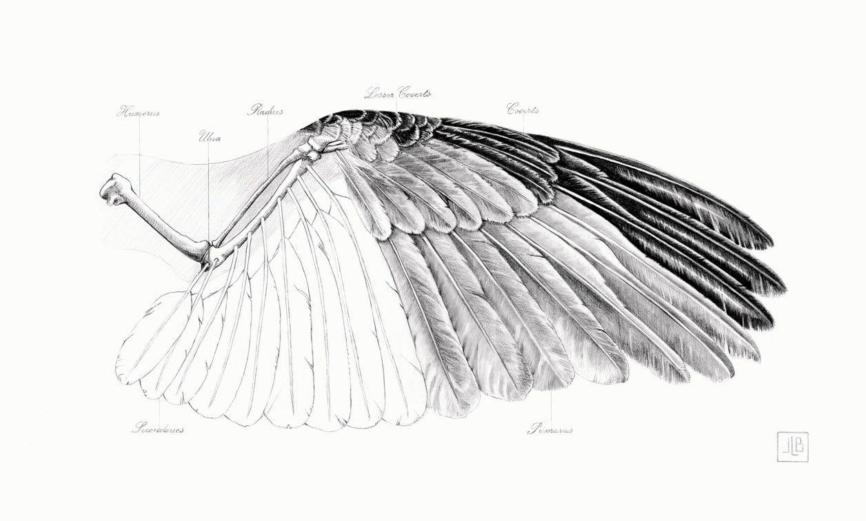 janettebird