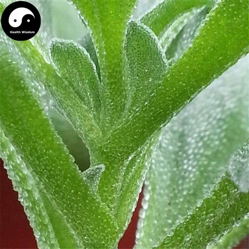 80 pcs iceplant Mesembryanthemum crystallinum Rare vegetable seeds