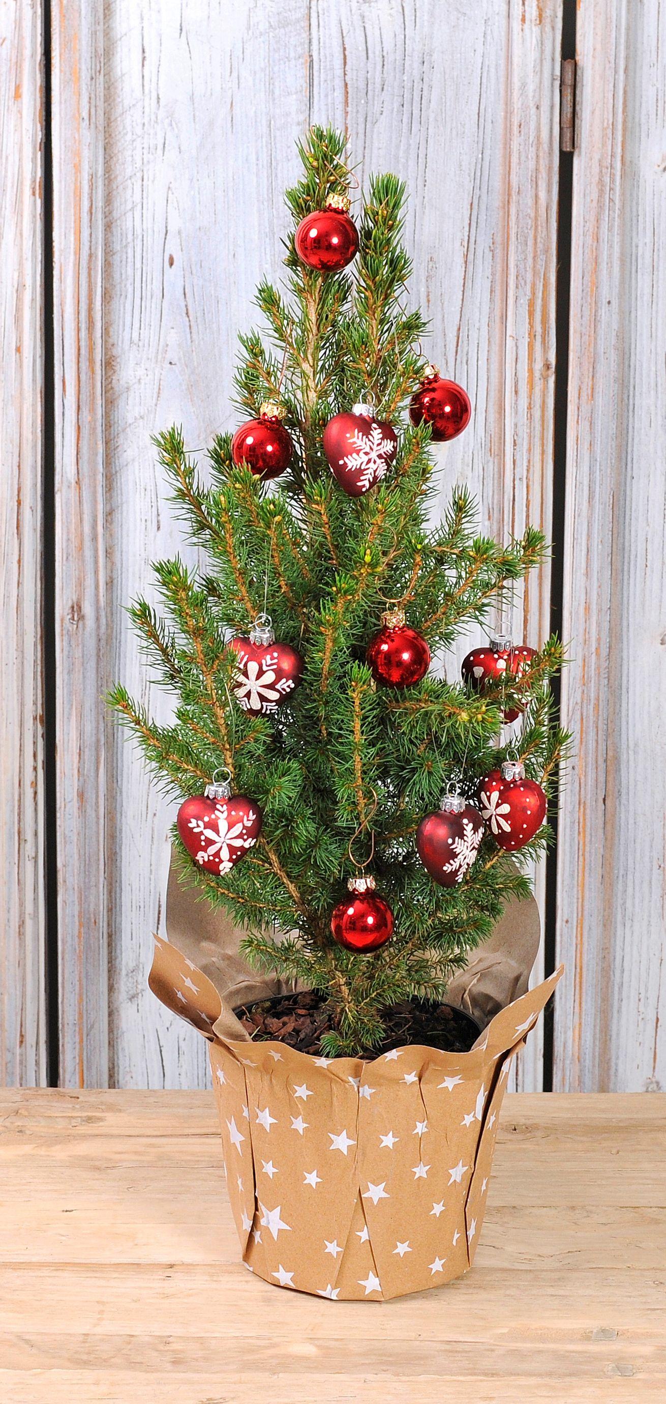 db647dc82fbc018fb85cd0fb3984a81f Schöne Fensterbank Weihnachtlich Dekorieren Dekorationen