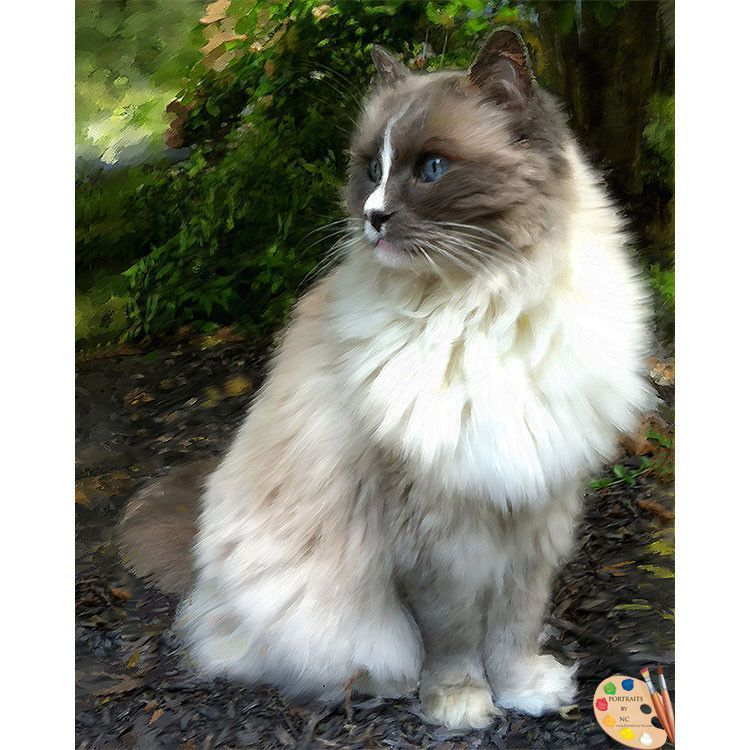 Rag Doll Cat Lilac Ragdoll Cat Portrait 367 Ragdoll Cat Oil Portraits Can Be Painted In A Variety Of Styles And With Backgroun Cat Portraits Ragdoll Cat Cats