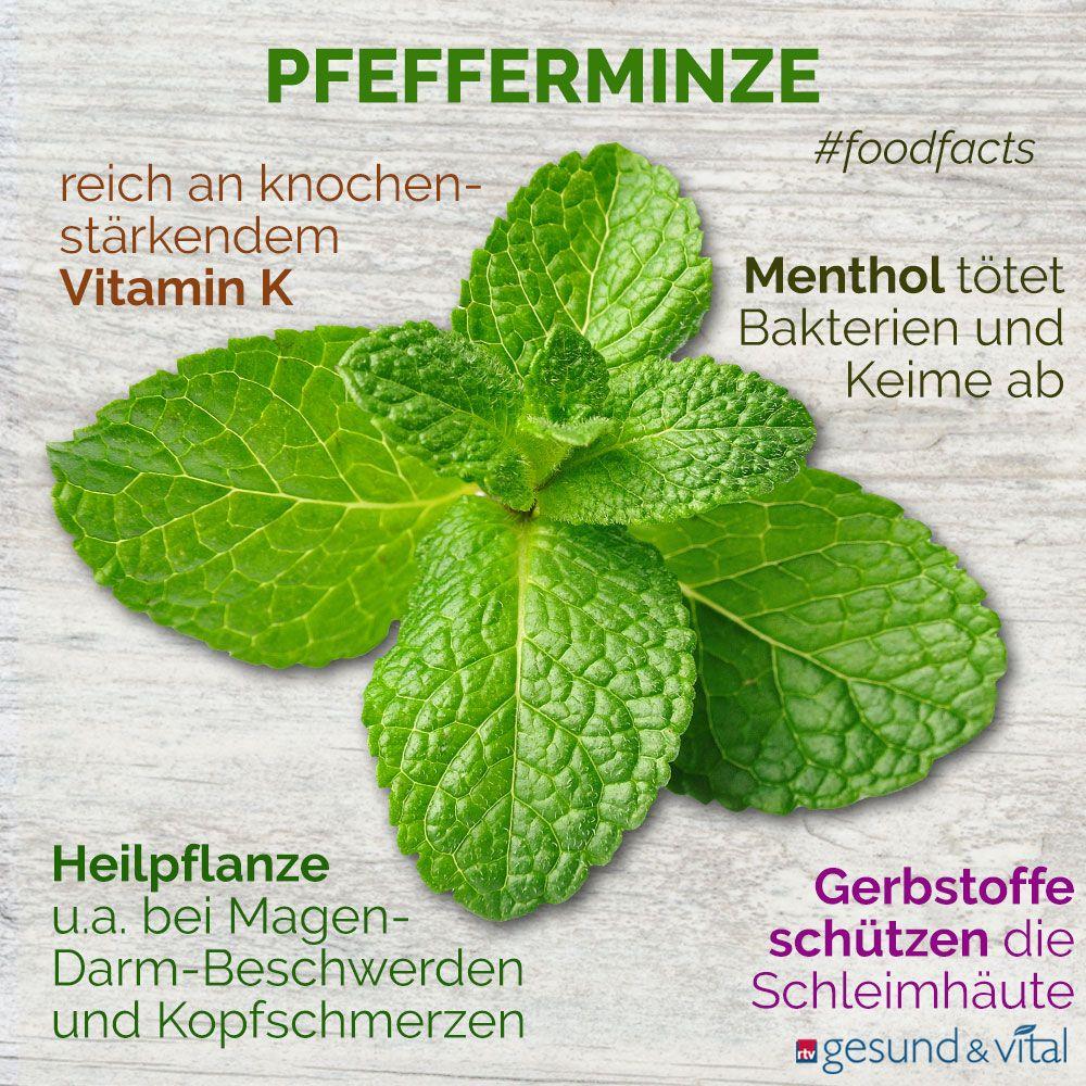Photo of Heilpflanze Pfefferminze: Erfrischt und entspannt