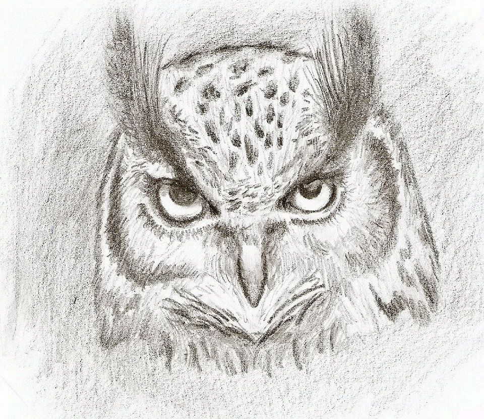 Uncategorized Easy Drawings Of Owls pencil drawings of owls easy owl in pencil