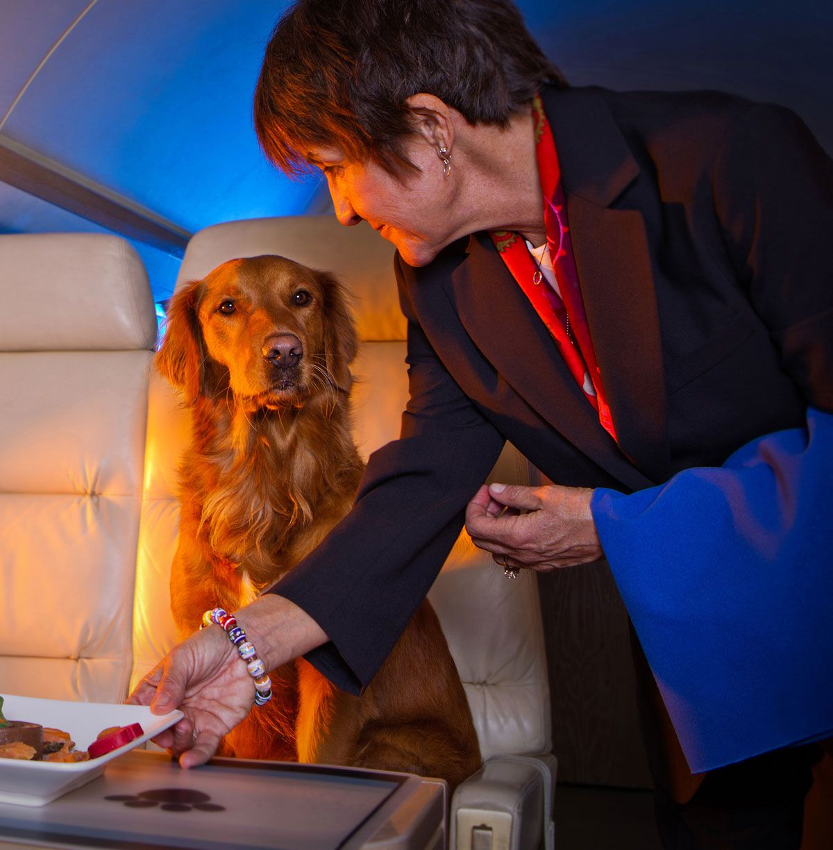 Flying Your Pet By Private Jet Pet Travel Luxury Pet Dog Travel Gear