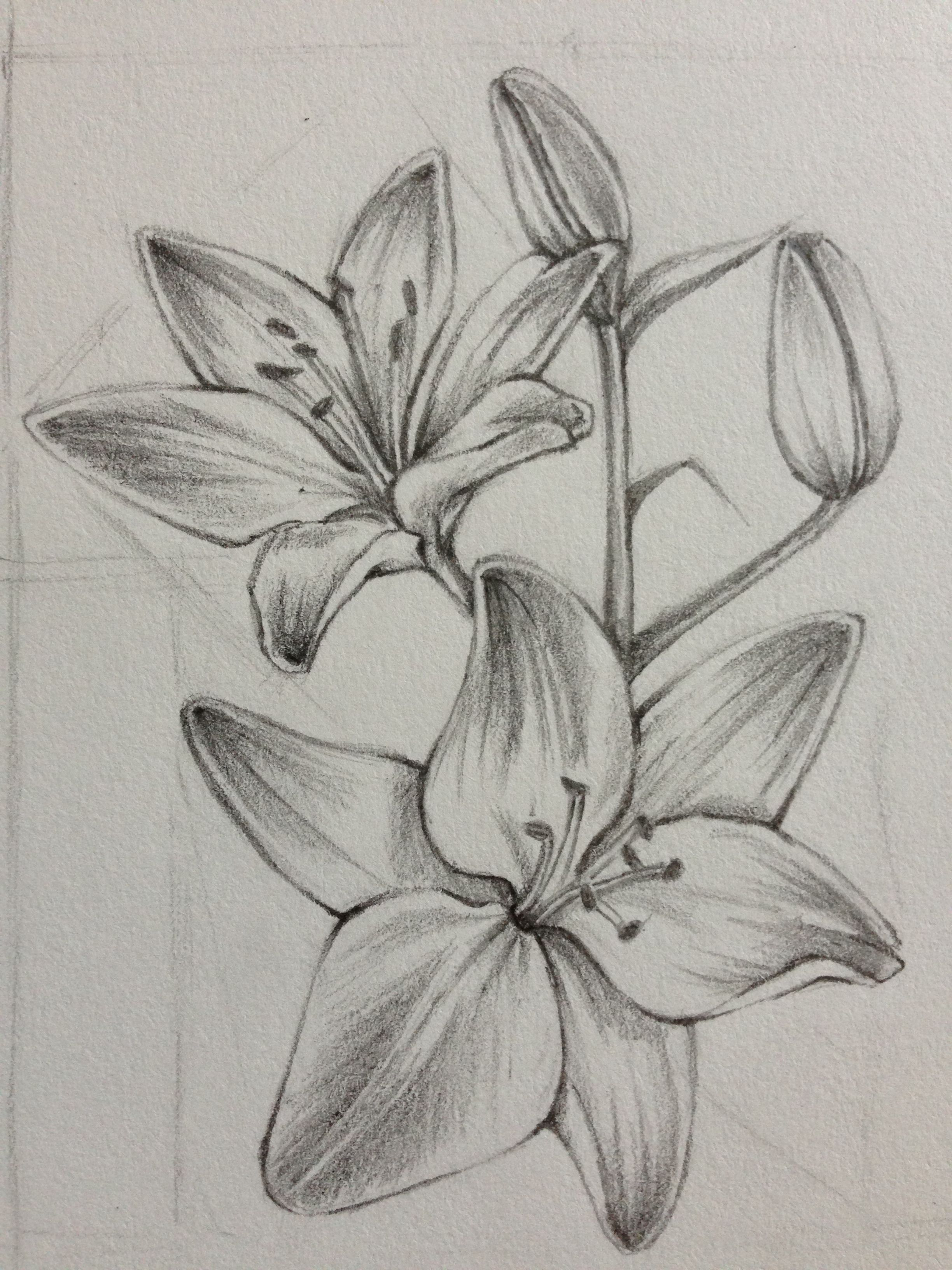 Realistic Lily Flower Drawing : realistic, flower, drawing, Flower, Realistic, Drawing,, Pencil, Drawings, Flowers,, Drawing