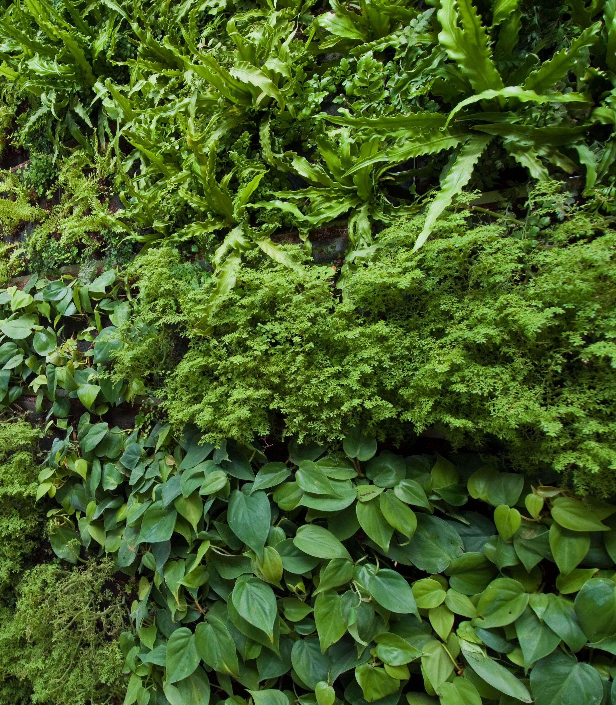 Image Result For Plant Wall Texture Timirest Plant Wall Green