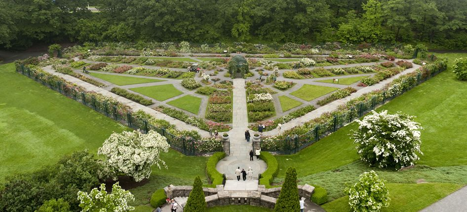 New York Botanical Garden Peggy Rockefeller Rose Bronx