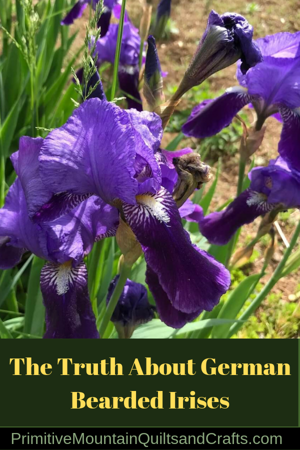 The Truth About German Bearded Irises