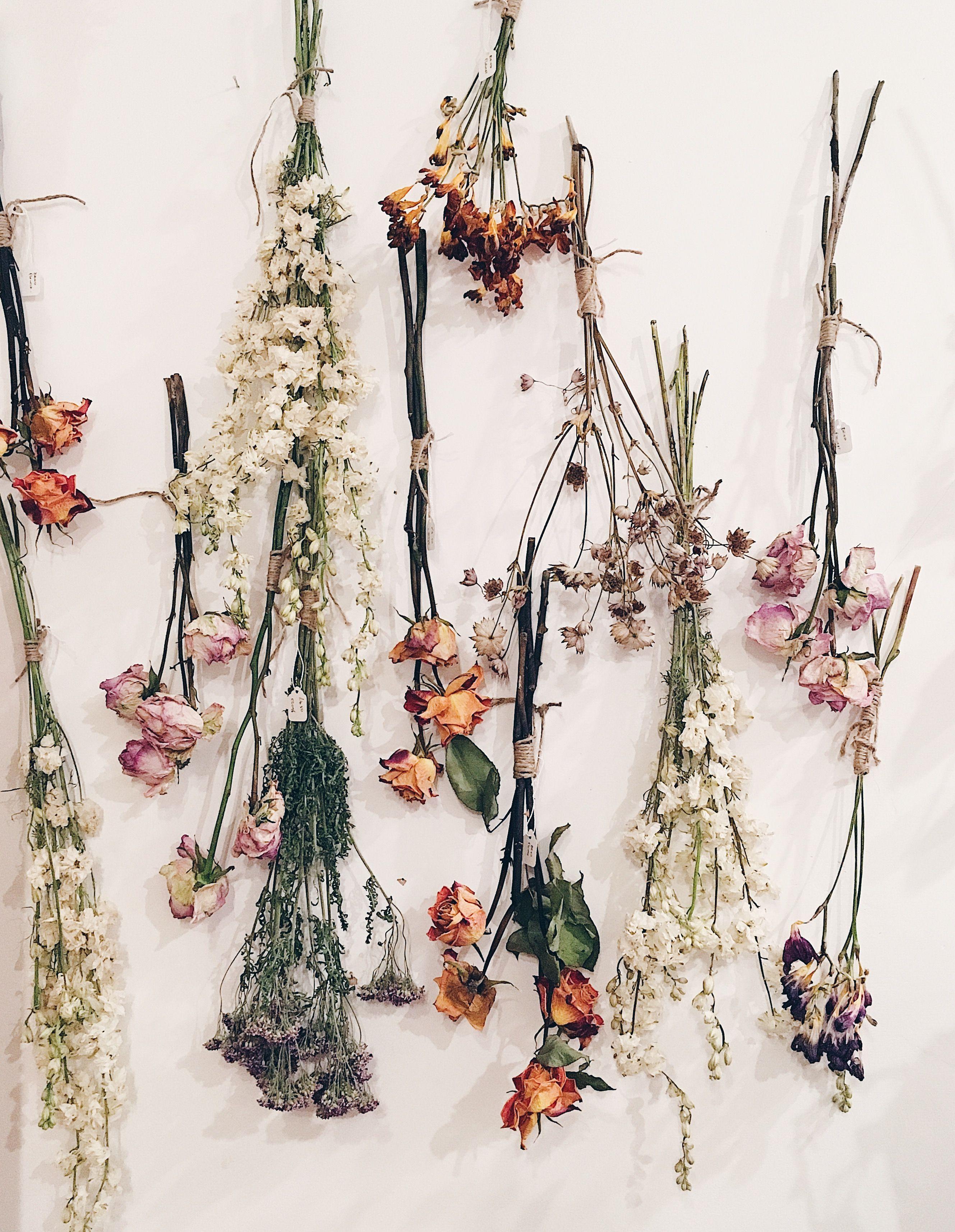 Сухие растения картинки работе фотошопе
