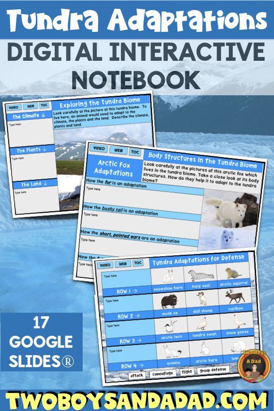 Tundra Animal Adaptations Interactive Notebook Google