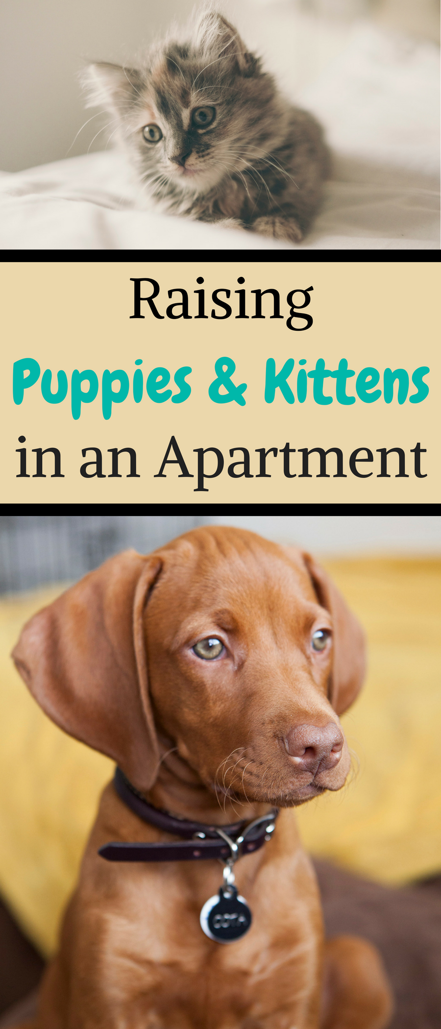 How to Raise Puppies and Kittens in an Apartment