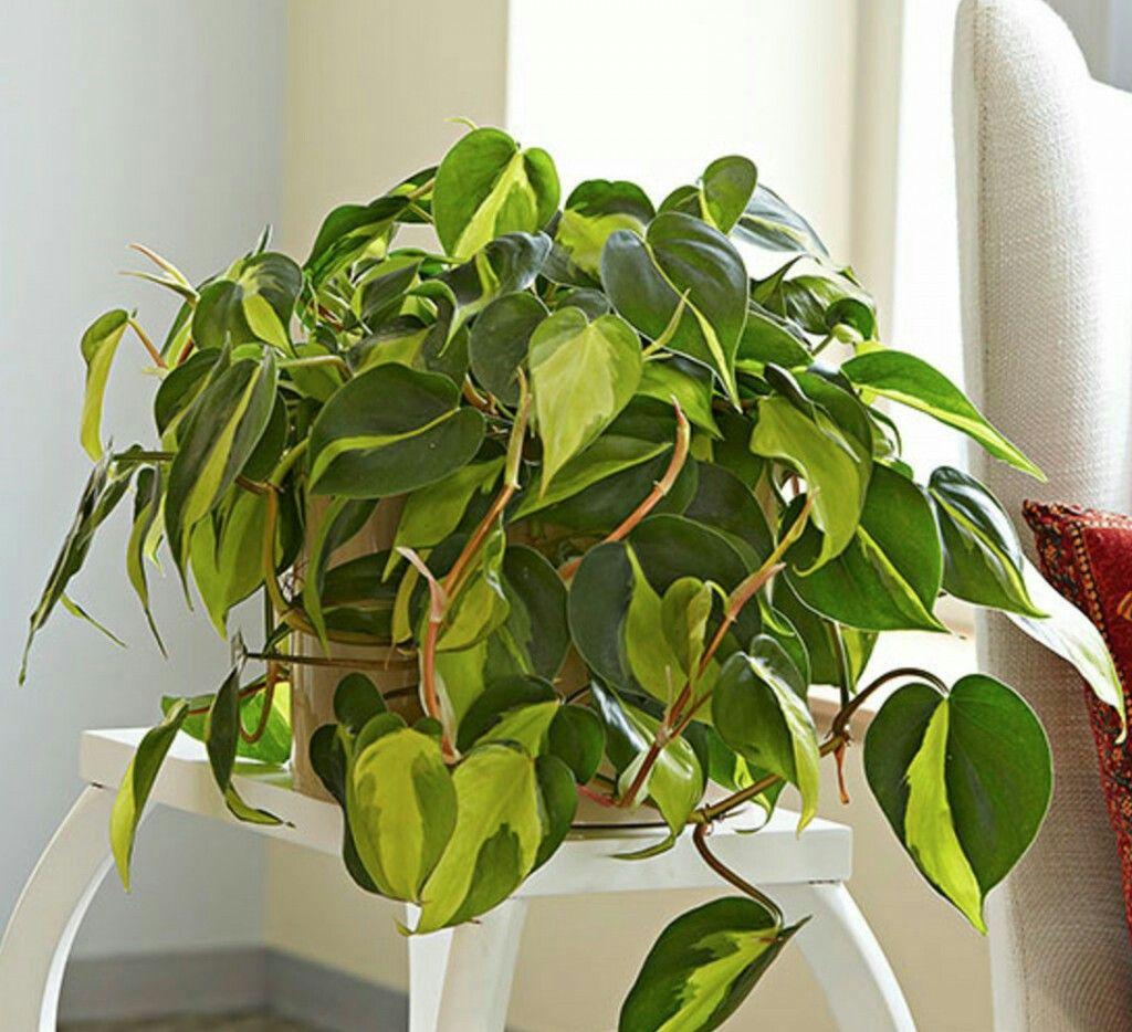 plantes ayant besoin de peu ou pas de lumi re jardinage. Black Bedroom Furniture Sets. Home Design Ideas